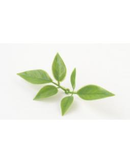 КАРРО Лист розы мини зеленый комбинированный 500 шт. (опт)